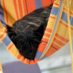 Pfötchenpassagiere  – Flugservice für den Hund
