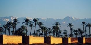 Sommertraum im Winter: Die Gärten von Marrakesch