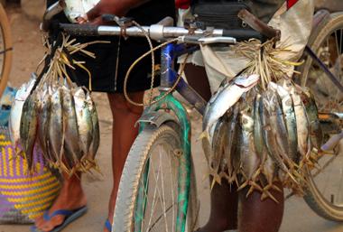 Einen tollen Fang präsentiert der Fliegende Händler auf ungewöhnliche Art. (Foto Karsten-Thilo Raab)