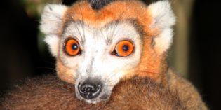 Madagaskar – Land der grandiosen Naturphänomene