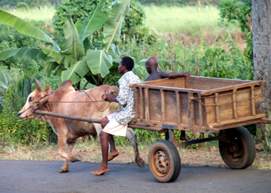 Ochsenkarren sind für viel noch immer das wichtigste Transportmittel. (Foto Karsten-Thilo Raab)