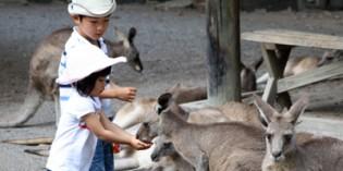 Tierische Begegnungen in Südaustralien
