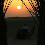 Abu Dhabi – der Vater der Gazelle