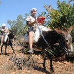 Esel als mobile WLan-Router unterwegs