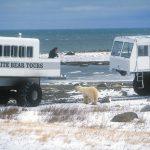 Auge in Auge mit dem weißen Eisbär-Riesen
