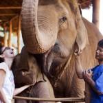 Spezial-Kaffee aus Thailand: Bohnen von Elefanten vorverdaut