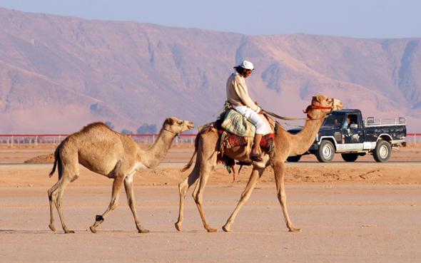 Für viele sind die Dromedare noch immer das wichtigste Transportmittel. (Foto Karsten-Thilo Raab)