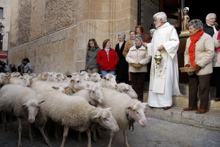 Mallorca, St.Antonius, Sa Pobla, Foto Udo Haafke