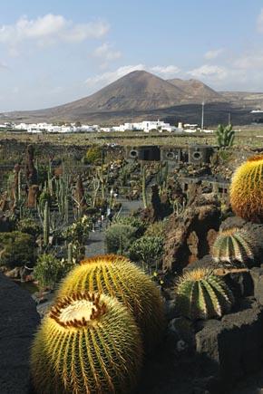 Guatiza, Jardin de Cactus,  Lanzarote, Copyright Udo Haafke