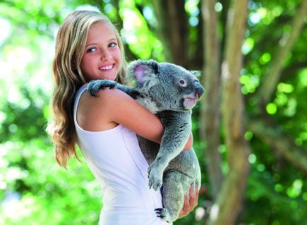 Koala+Kind_Copyright_TourismQueensland