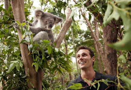 Koala_CurrumbinSanctuary_GoldCoast_TourismAustralia