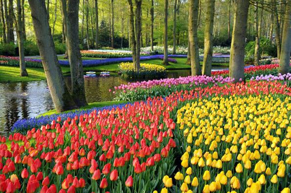 Weltberühmt die Blütenpracht am Keukenhof. (Foto NBTC)