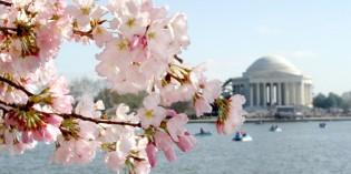 Großes Frühlingsfest in der Hauptstadt: Washington D.C. blüht auf