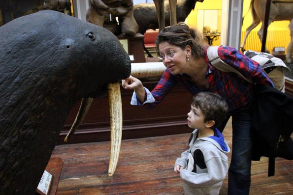 Natural History Museum, Copyright Karsten-Thilo Raab (27)