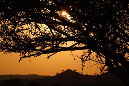 Abenteuer Afrika: In Botswana erfüllen sich Safariträume. (Foto: Botswana Tourism Organisation)