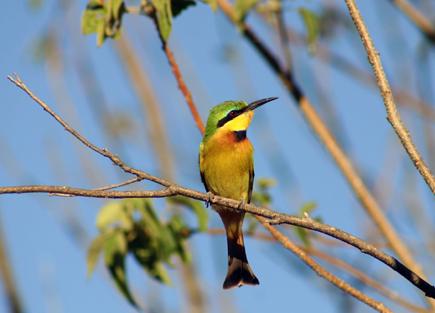 """Vogelkundler gehen in Botswana am besten auf einen professionell geführten """"Bushwalk"""". (Foto: Botswana Department of Tourism)"""