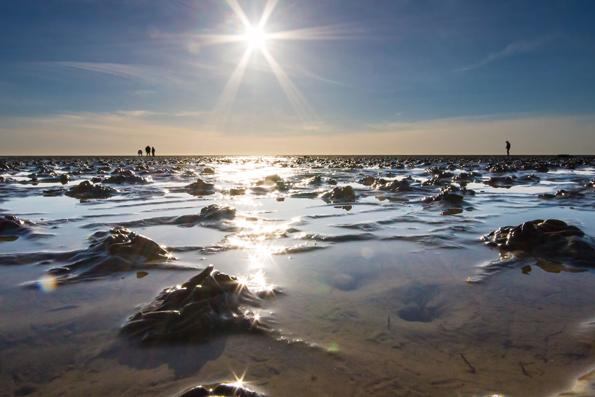 Die Naturschönheiten sind im Unesco-Weltnaturerbe Wattenmeer zum Greifen nah. (Foto:  Michael Hoff)