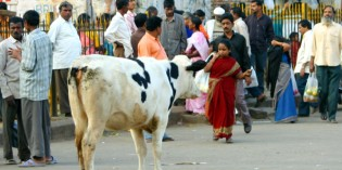 Kuh vadis, Nepal? Muhsame Straßenreinigung