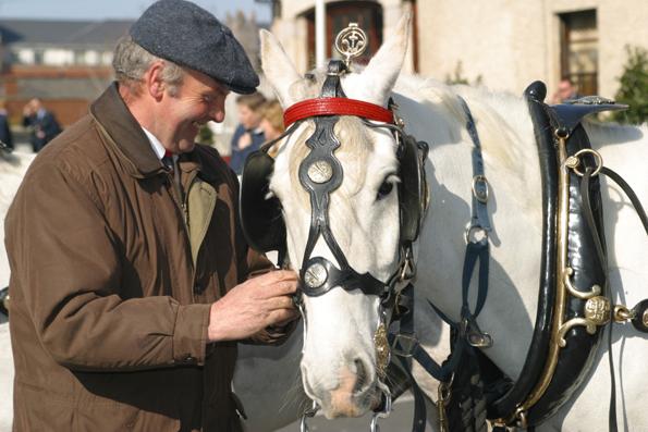 Noch immer karren einige Händler ihre Waren mit dem Pferdewagen zu Dublins Märkten. (Foto: Karsten-Thilo Raab)