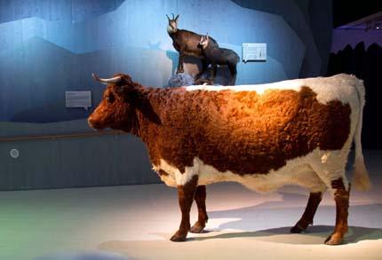 Ein Teil der Ausstellung widmet sich dem Lebensraum Alm. (Foto Nationalparkverwaltung Berchtesgaden)