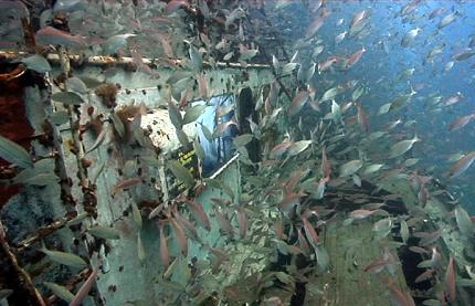 Auch Fischschwärme scheinen für die Unterwasserkunst zu schwärmen.