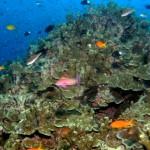 Außergewöhnlicher Artenreichtum in Thailands Unterwasserwelt