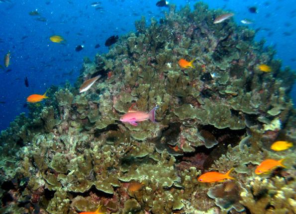 Ein buntes Kaleidoskop an Fischen und Korallen findet sich vor der Küste Thailands.