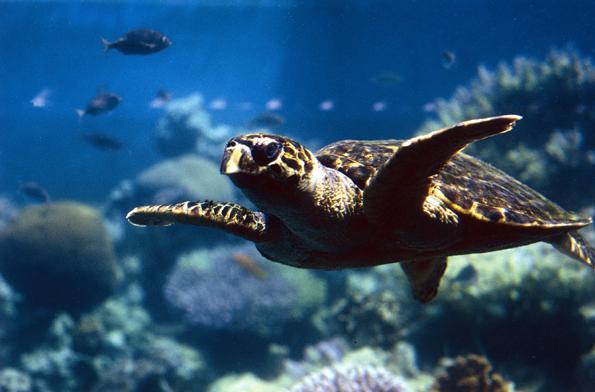 Eine faszinierende Unterwasserwelt entfaltet sich im Marinepark von Aqaba.