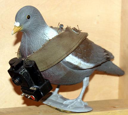 Ungewöhnlicher Spion: Taube mit Kamera. (Foto: Karsten-Thilo Raab)