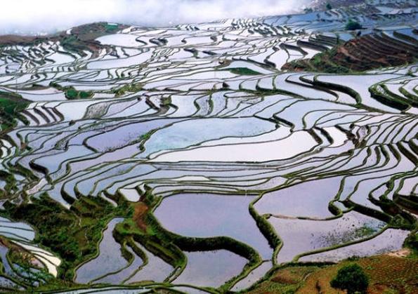 Die Reisterrassen von Honghe bestechen durch ein ausgeklügeltes Bewässerungssystem und sind nun Welterbe. (Foto: Xinhua)
