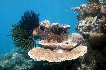 Eine bunte Unterwasserwelt wartet vor der Küste Zentralamerikas.
