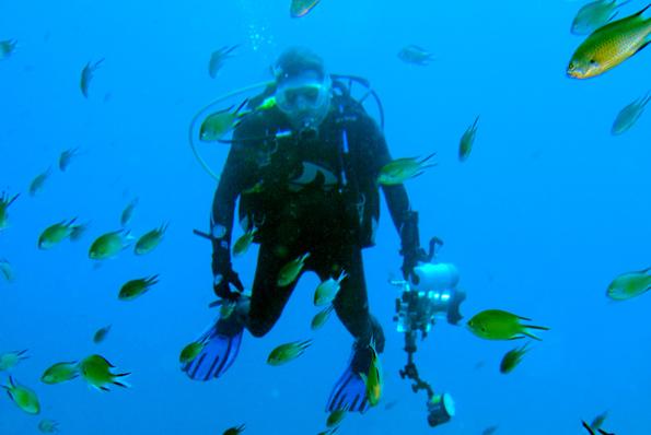 Rund um Teneriffa finden Tauchen eine faszinierende Unterwasserwelt vor.