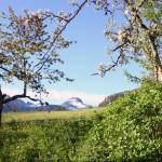 Auf einen Löwenzahnwein nach Norwegen – Zu Besuch beim nördlichsten Winzer