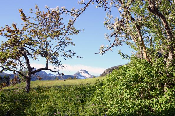 Das wohl nörlichste Weinanbaugebiet Europas: Andalsnes Villa Vengetind Garten. (Foto: Ulrike Katrin Peters)