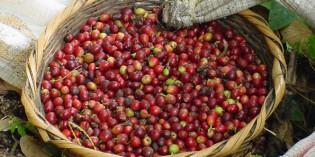 Auf den Spuren des Kaffees durch Nicaragua