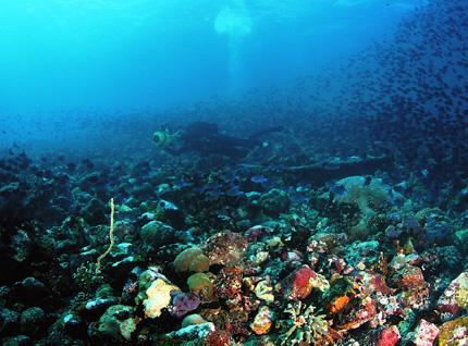 Die Unterwasserwelt rund Derawan besticht durch ungeahnten Artenreichtum.
