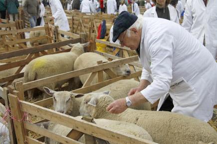 Stets ein großes Happening: Der Schafsmarkt in Masham. (Foto: Udo Haafke)