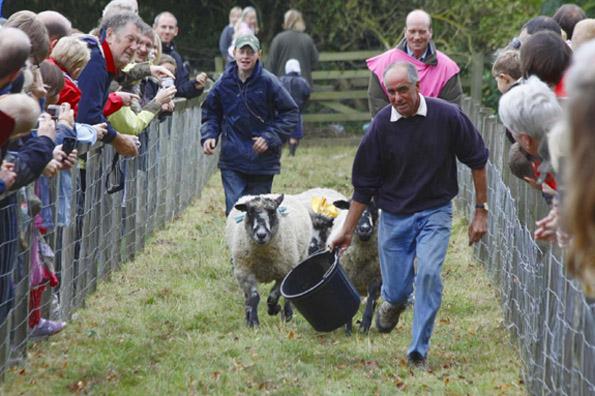 Beim nicht ganz so ernst genommenen Schafsrennen iun Masham, laufen vier Tiere um die Wette. (Foto: Udo Haafke)