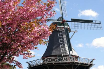 Unterwegs laden 100 Jahre alte Windmühlen mit ihren Teestuben zur gemütlichen Rast ein. (Foto: Störtebekerland)