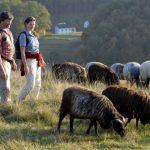 Der Jurasteig in Ostbayern – wo Küchenschellen und wilder Thymian grüßen