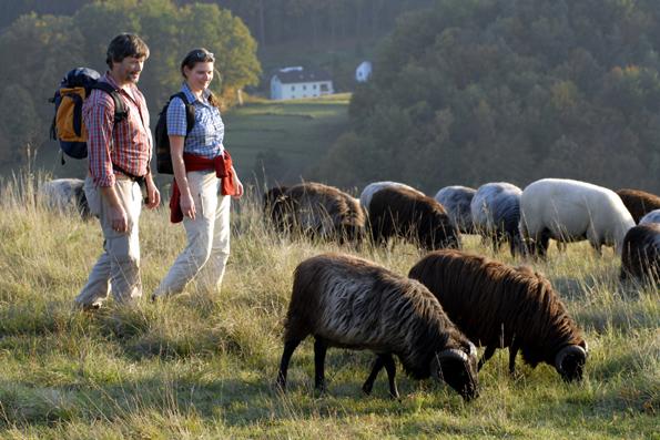 Wildromantisch: Im Bayerischen Jura sind Schafe die natürlichen Landschaftspfleger. (Foto: Martin Gabriel)