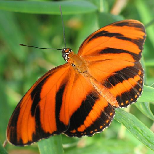 Ab September 2013 wird die botanika wieder zum Reich der Schmetterlinge. (Foto: Botanika)