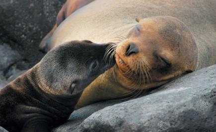 Die Galapagos-Inseln - Ecuadors berühmtester Landstrich - stehen seit 35 Jahren unter dem Schutz der UNESCO.