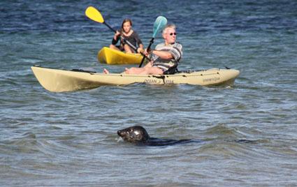 Tierische Begegnung im Kanu: Neugierige Robben beobachten jeden Paddelschlag. (Foto: Karsten-Thilo Raab)