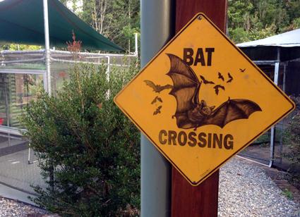 Ungewöhnliches Warnschild im Tolga Bat Hospital.