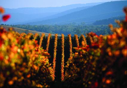 Bekannt für seine Weinberge: Das Yarra Valley. (Fotoi: Tourism Victoria)