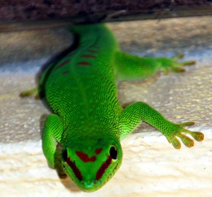 Mit zum Teil grellen Farben weiß Madagaskars Fauna zu bestechen. (Foto: Karsten-Thilo Raab)