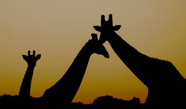Der Krüger Nationalpark gilt als eines der wichtigsten Schutzgebiete Afrikas, das sich am besten zu Fuß erkunden lassen.