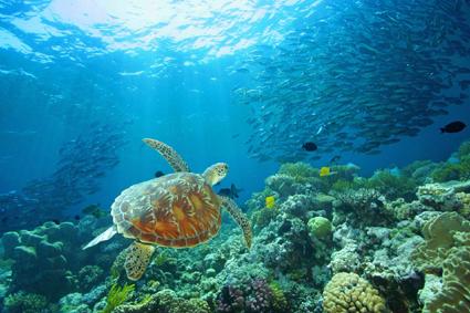 Fitzroy Island ist mit dem Boot in rund 45 Minuten ab Cairns zu erreichen. 8Foto: Posseidon Cruises)