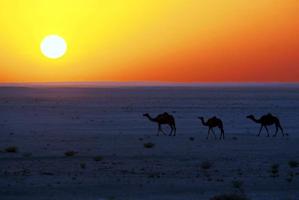 Wie im Märchen: Die omanischen Wüsten sind weitläufig. Eine geführte Kamel-Tour bis zum Indischen Ozean kann eine Woche dauern. (Foto: djd)